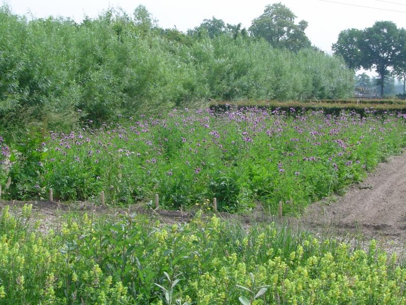 2-de-kwekerij-van-heem-in-overberg-leverancier-van-wilde-plantenzaden