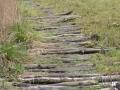1-knuppelpad-door-het-moerasdeel-in-heempark-delft